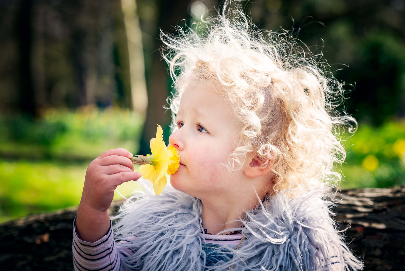 Bright close up portrait of a girl with curly hair, smelling the daffodils